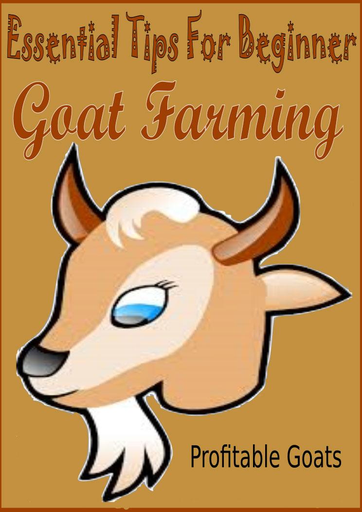 Beginner Tips For Goat Farming