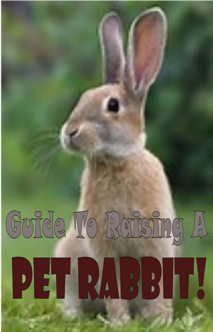 Guide To Raising A Pet Rabbit