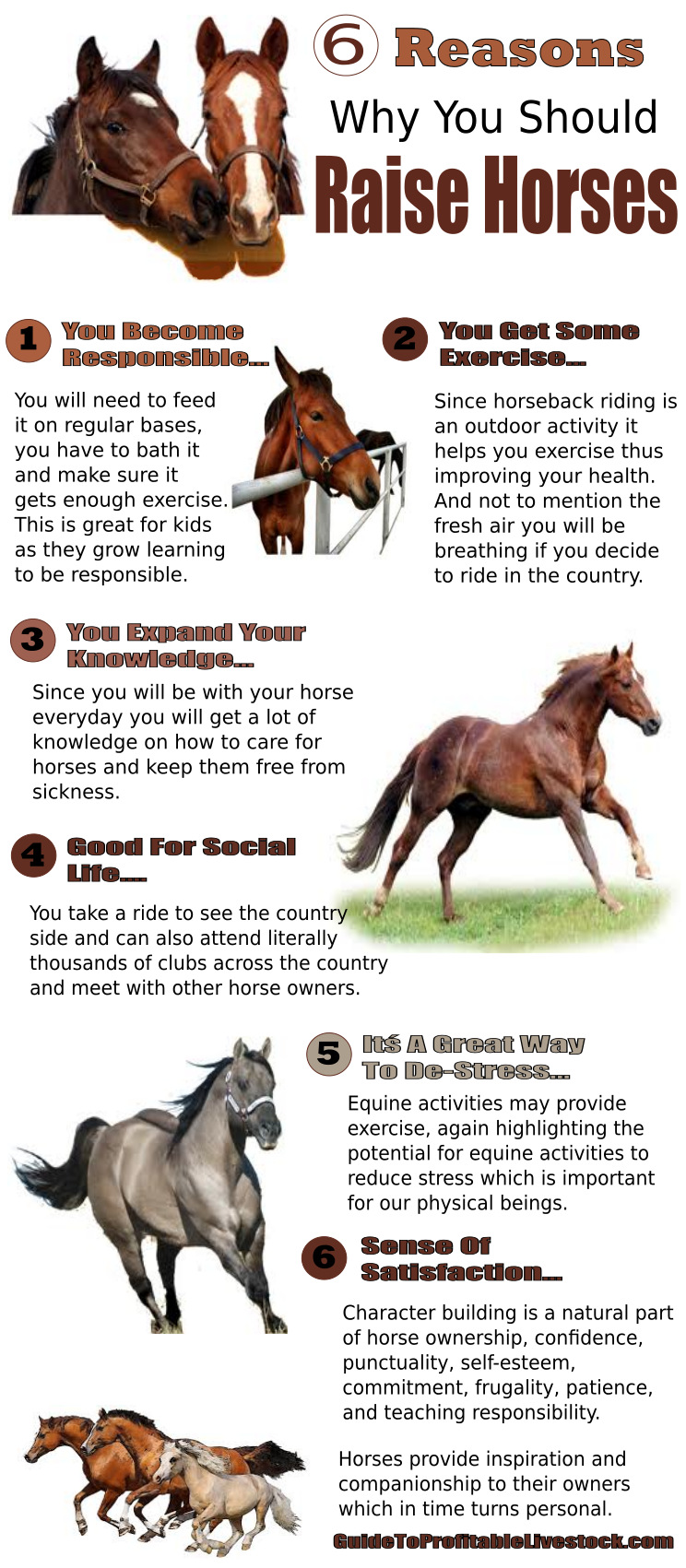 Six Reasons To Raise Horses