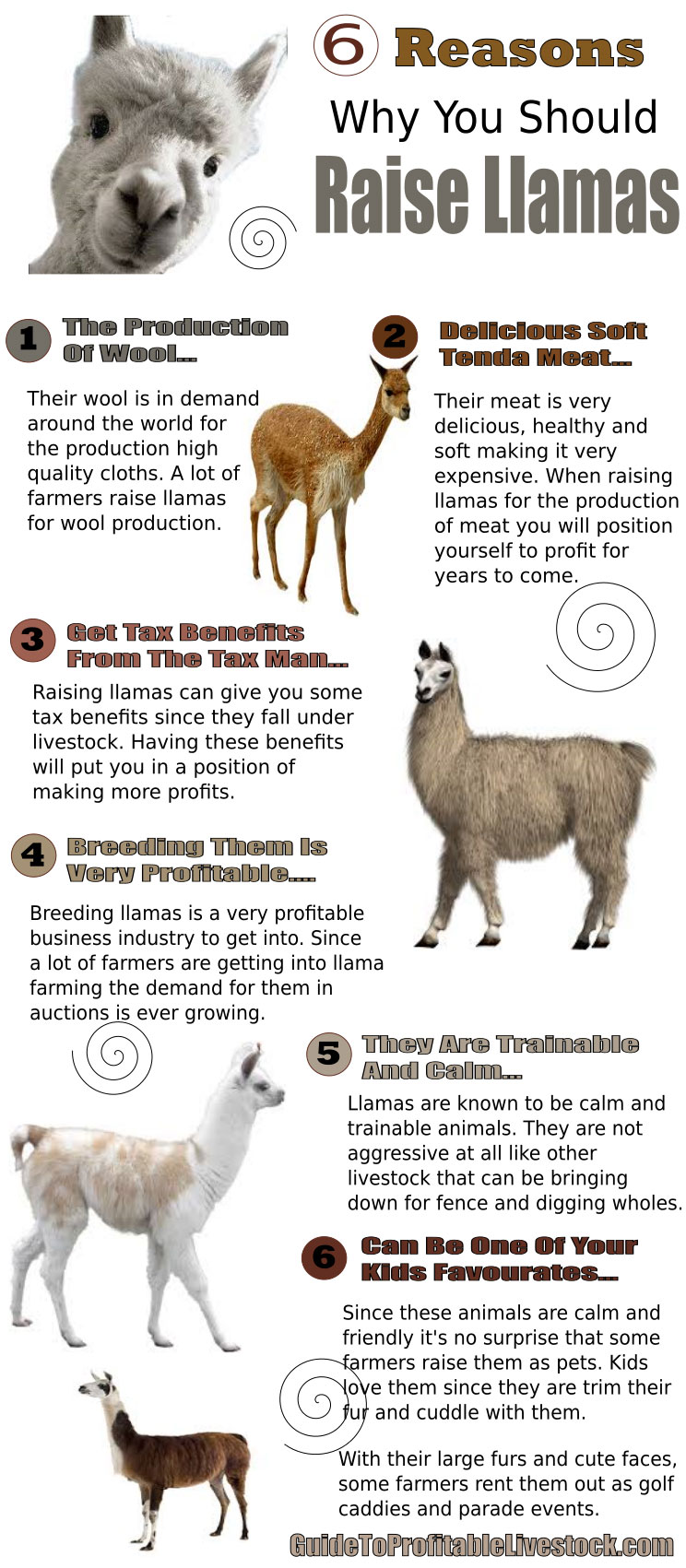 Reasons To Raise Llamas