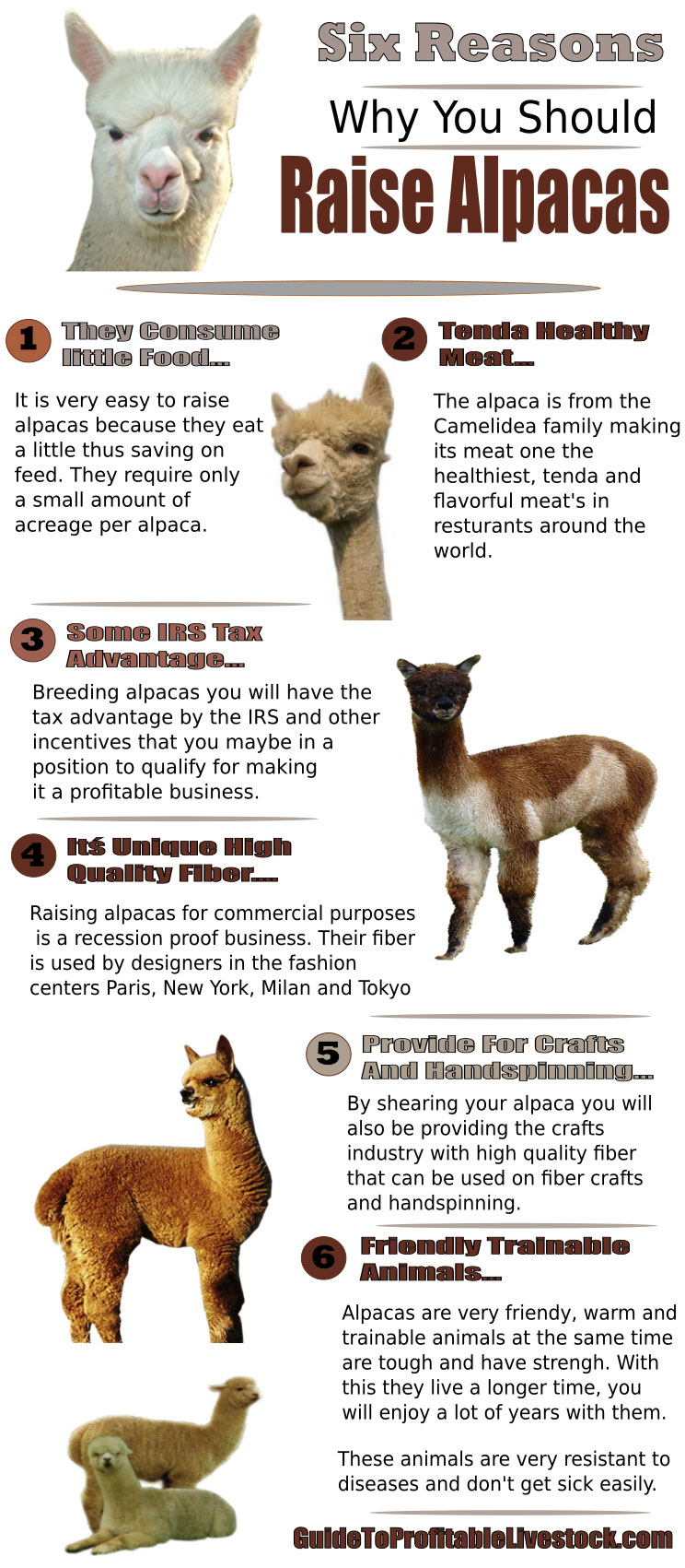 Reasons To Raise Alpacas