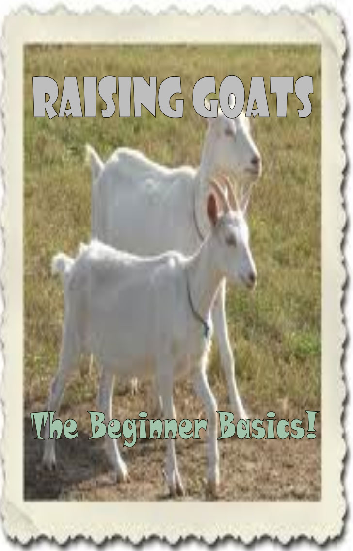 Beginner Tips For Goat Farming