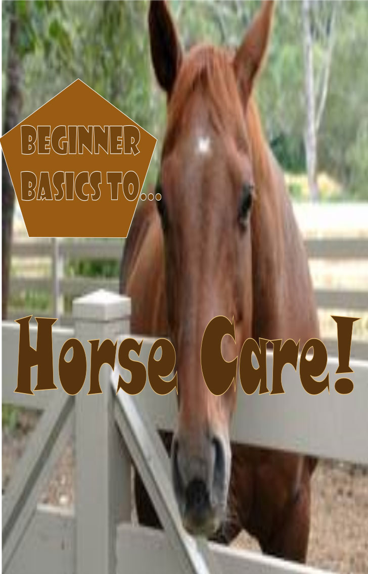 beginner basics to horse care