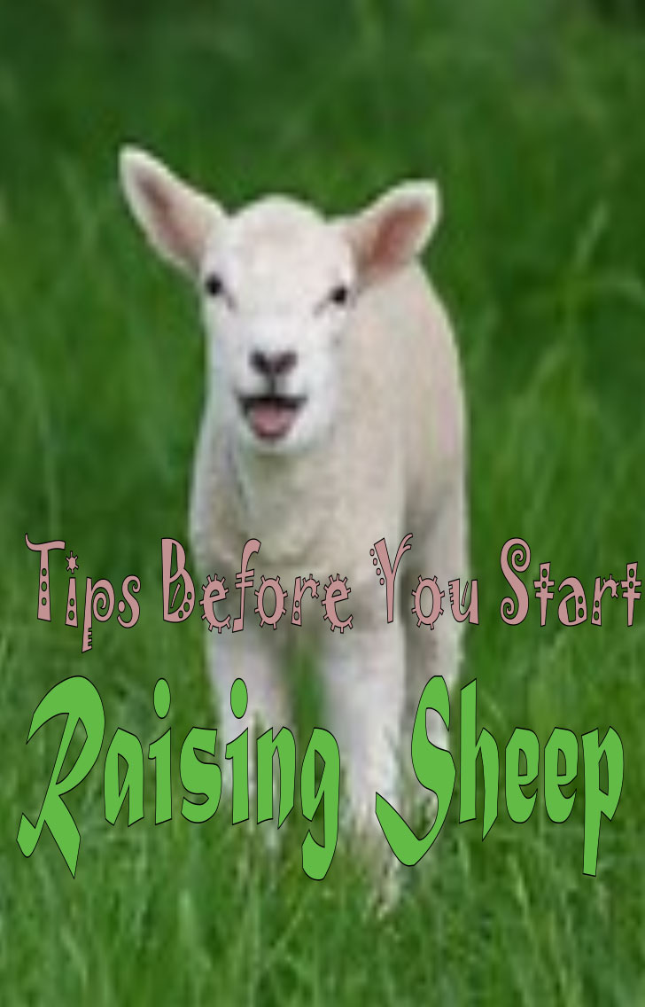 guide before you start raising sheep