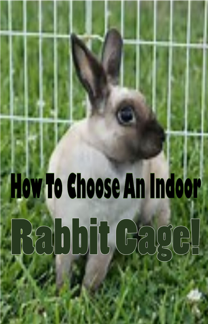 how to choose an indoor rabbit cage