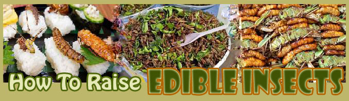how to raise Edible Insectss about us