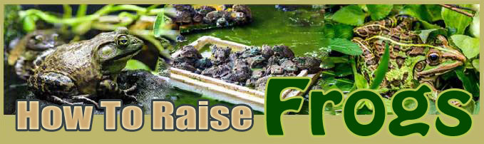 How To Raise frogs FAQ
