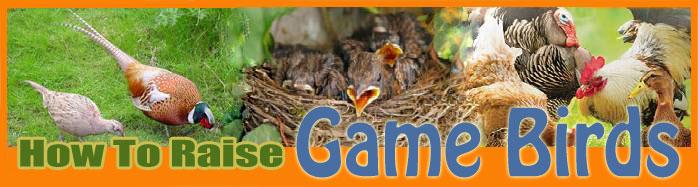 How To Raise game birds FAQ