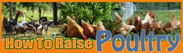 How To Raise poultry About Us