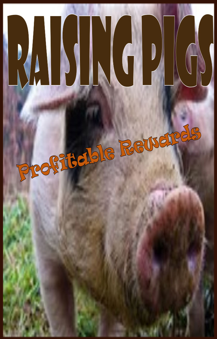 profitable rewards of raising pigs