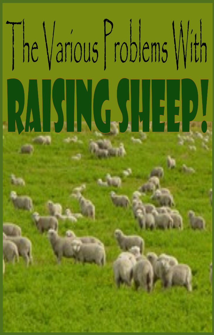 the various problems with raising sheep